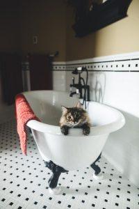 Pet Proof Plumbing